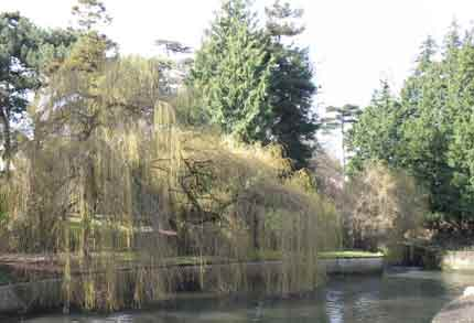 Weeping willow from the bridge - Botanic Gardens Glasnevin