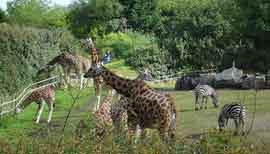 Belfast Zoo (Copyright Million Little Gods cc2