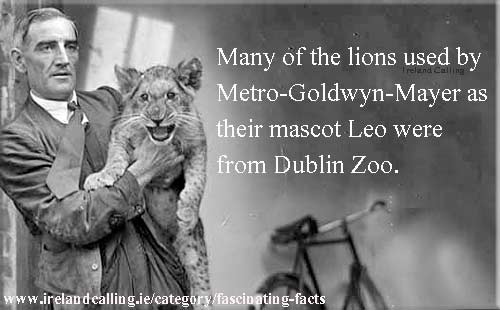 MGM used Lion-cubs-from-Dublin-zoo